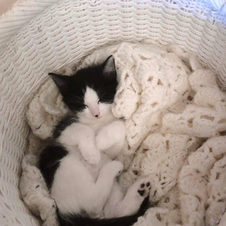 6.20 Kitten 2